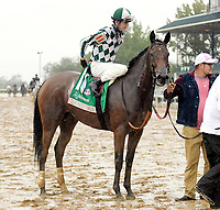 "Lexington KY - October 8 Romantic Vision wins the 62nd running of the Juddmonte Spinster (Grade 1) for owner G. Watts Humphrey Jr., trainer George ""Rusty"" Arnold and jockey Brian Hernandez.  October 8, 2017"