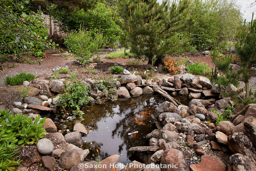 Backyard pond edged in natural fieldstone in Kyte California native plant garden
