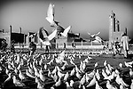 White pigeons are seen at the Blue Mosque in Mazar-e Sharif, 25 September 2013. (John D McHugh)