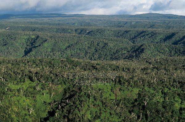 View of Alakai Swamp, Kauai, Hawaii, USA