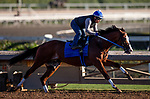 OCT 21: Snapper Sinclair for the Breeders' Cup at Santa Anita Park in Arcadia, California on Oct 21, 2019. Evers/Eclipse Sportswire/CSM