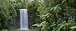 Millaa Millaa waterfall.