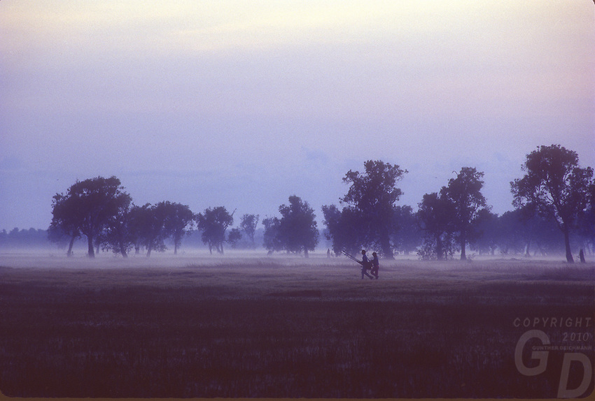 Early morning mist over Yellow Waters in Kakadu National Park Northern Territory, Australia