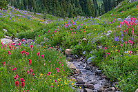 Wildflowers--lupine, arnica, paintbrush, cinquefoil, etc.--in subalpine meadow along small stream, Mount Rainier National Park, WA.  Summer.
