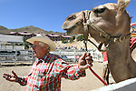 Joe Hedrick, of Hedrick's Exotic Animal Farm in Kansas, answers questions Friday, Sept. 10, 2010, during the 51st Annual Virginia City International Camel Races in Virginia City, Nev..Photo by Cathleen Allison