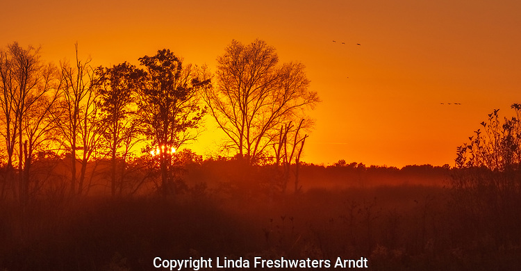 Sandhill cranes flying to roost as the sun sets over Crex Meadows in northwestern Wisconsin.