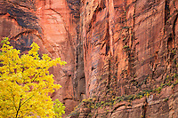 The Temple of Sinawava at Zion National Park Utah