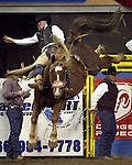 1/24/09--Photo by Rick Davis--PRCA cowboy Dustin Reeves of Owanka, South Dakota, awarded a re-ride option earlier in the night, scores an 86 point ride on a Calgary Rodeo Company bronc during action at the 103rd National Western Stock Show and Rodeo in Denver, Colorado.