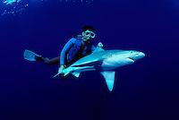 A shark researcher/diver (MR) attempts to revive a sandbar shark, Carcharhinus plumbeus, after examining it. Hawaii.