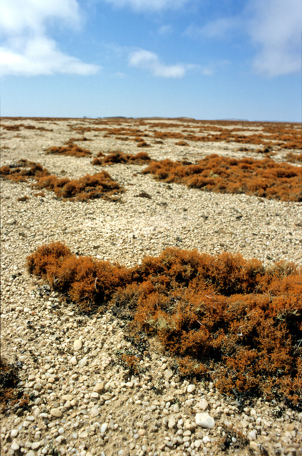 Zoutwoestijn in Namibi'