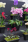 Laurence Hobbs Orchids. Hampton Court Palace Flower Show 2017.