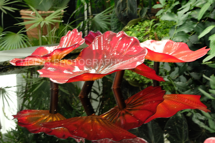 Dale Chihuly, NYBG. Autumn