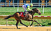 Sound Off winning at Delaware Park on 9/7/16