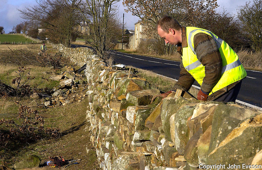 Professional stone-waller Adam Staley rebuilding a 400 metre stretch of wall with his father Lewis and uncle Lawrence on Brian Medd's Low Park Farm, Barnard Castle Co Durham. There is a strong family link to the profession with father and son Colin and Mathew Staley operating in the Kaber area of Cumbria, and Bernard Staley and sons Richard and Jonathan operating from Kirkby Stephen, Cumbria. On occasions all eight family members work together on the same job.