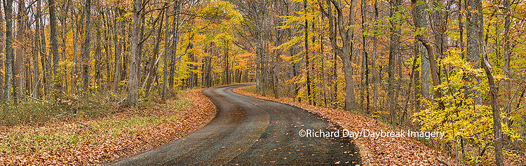 63995-00909 Road in fall, Brown County State Park, IN
