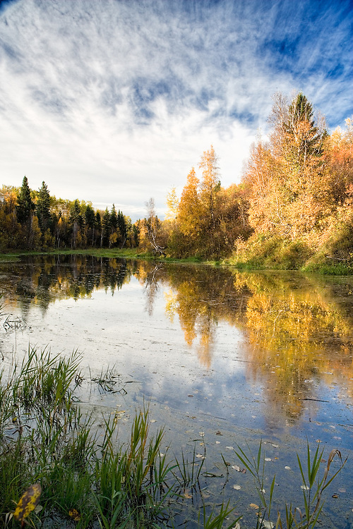 Beaver pond on a fall morning in Edmonton
