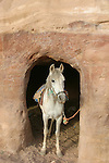 Horse in an ancient tomb Petra. Jordan