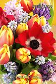 Gisela, FLOWERS, BLUMEN, FLORES, photos+++++,DTGK2010,#f#