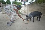 Georgette Saintus feeds a pig she received from Servicio Social de las Iglesis Dominicanas in the Haitian community of Ganthier. SSID, a member of the ACT Alliance, has worked extensively in the community since it was devastated in 2016 by Hurricane Matthew, repairing housing and providing animals to survivors as a way to jumpstart the local economy.