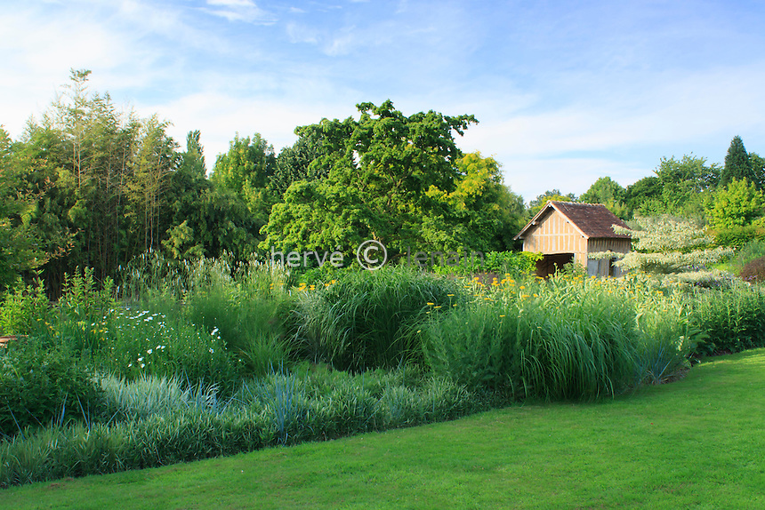 Jardins du pays d'Auge (mention obligatoire dans la légende ou le crédit photo):.autour du bassin, graminées et au milieu un robinier 'Twisty Baby' (Robinia pseudoacacia 'Twisty Baby').