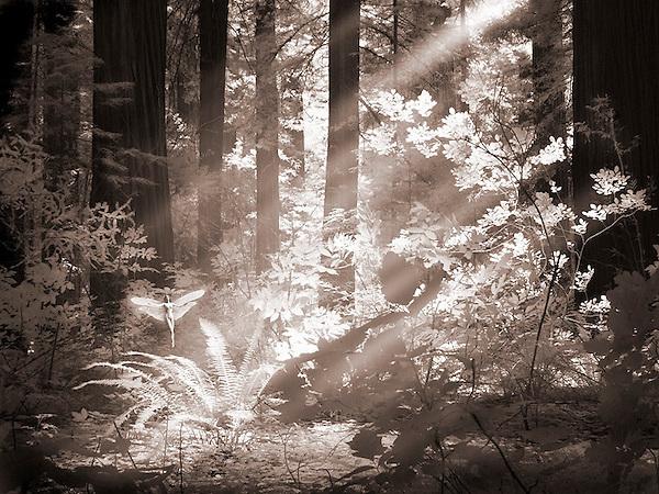 "B&W photo of a ""fairy"""