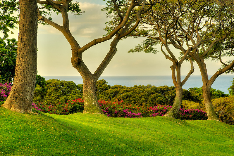 Trees and ocean view at Four Seasons. Lanai, Hawaii.