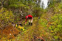Nature walk near the Bear Track Inn, near Gustavus, Glacier Bay, southeast Alaska USA
