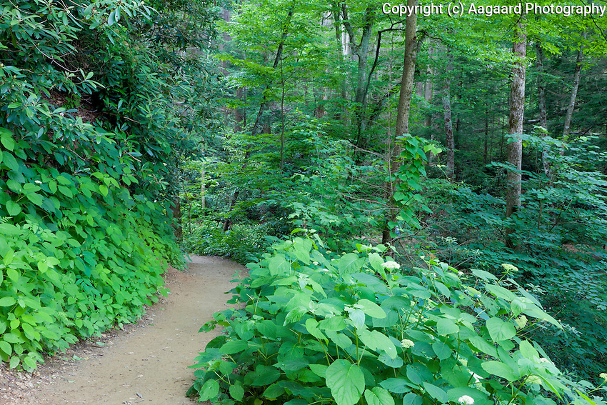 Along the Trillium Gap Trail, Great Smoky Mountains National Park, Tennessee