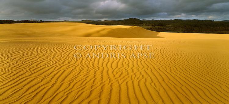 Sand dunes at Ninety Mile Beach. Northland Region. New Zealand