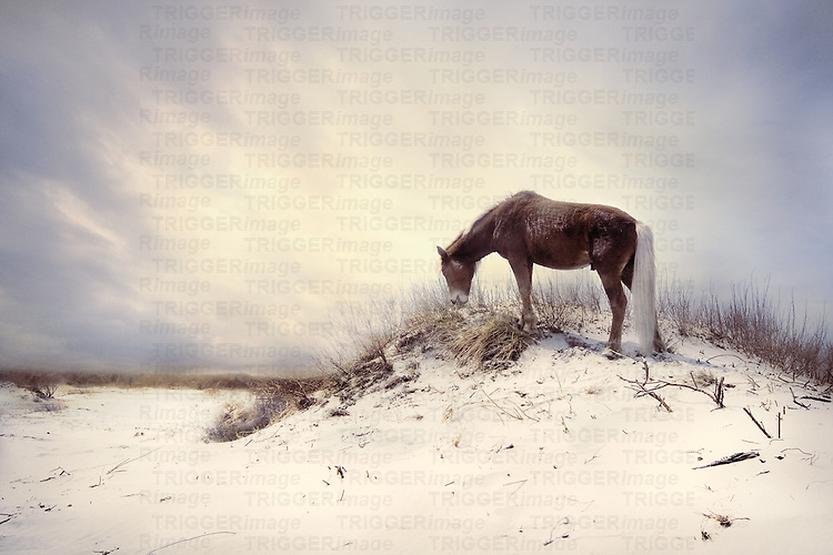 A pony on a sandy beach