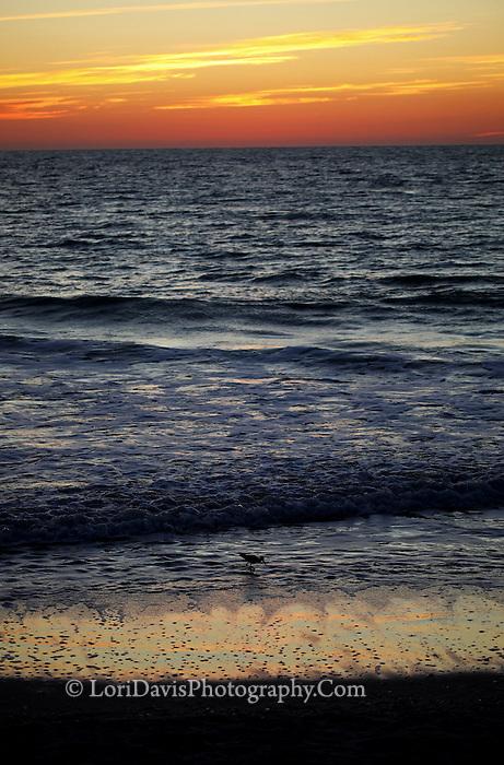 Sandpiper Sunset  #F25