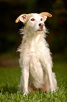 Wiloow, a Terrier mix, poses for a photo in her yard in Holly Hill, FL.  (Photo by Brian Cleary/www.bcpix.com)