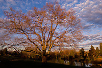 A large tree in winter at sunset is shown in the Berewick master-planned community in southwest Mecklenburg County, Charlotte, NC. The property is developed by Pappas Properties.