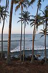 Tropical coastal scenery of palm trees on a hillside by blue ocean, Mirissa, Sri Lanka, Asia