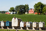 Mail boxes in row, farm with red barn, Lake Lillian, Minnisota.