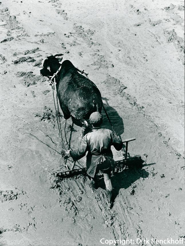 Landwirtschaft  in Shaoshan in der Provinz Hunan, China 1976