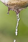 Fotos brasileiras - Pingo d'agua caindo do telhado em dia de chuva.