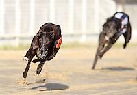 Greyhound Racing - Romford 31-Jan-2009