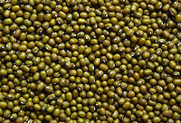 Semi di soia verde..Seed of green soybean..  .