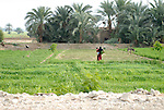 People working in the fields on the West Bank near Luxor.The town of Luxor occupies the eastern part of a great city of antiquity which the ancient Egytians called Waset and the Greeks named Thebes.