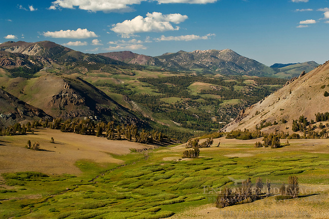 Slopes of the eastern Sierra mountains near Sonora Pass, Toiyabe Natilonal Forest, Mono County, California