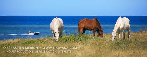 Chevaux sur la presqu'île de Ouano, La Foa, côte ouest Nouvelle-Calédonie