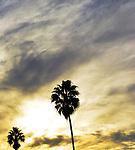 California Emptied