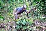 "Helena B. Mensahn, 37, works with several dozen women to grow cassava on a six-acre farm in Mount Barclay, Liberia. The income-generating project, called ""Say No to Poverty,"" is administered by the National Federation of Women Employees and Allied Workers, with financial support from United Methodist Women."