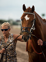 HALLANDALE BEACH, FL - March 31: Hofburg, #7, heads to the saddling paddock, well aware of the camera, before the Grade I Xpressbet Florida Derby at Gulfstream Park on March 31, 2018 in Hallandale Beach, FL. (Photo by Carson Dennis/Eclipse Sportswire/Getty Images.)
