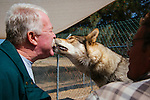 LAKE HUGHES - MAY 21: Paul and Colette Pondella have 10 wolfdogs in their pack at the Shadowland Foundation. Visitor John Westbrook lets one of the wolfdogs take a treat from his lips. (Photo by Kendrick Brinson)