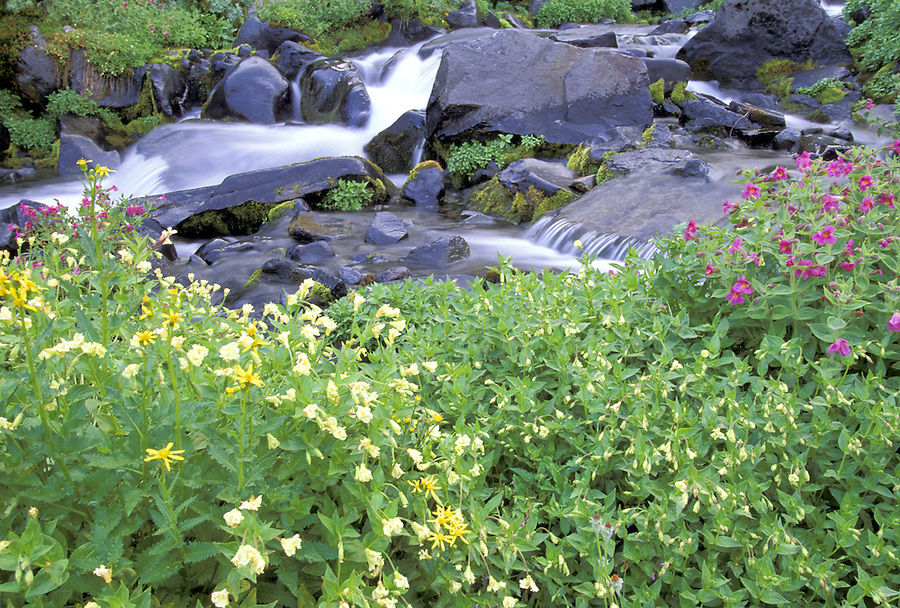 Wildflowers and Paradise River, Paradise Valley, Mount Rainier NP, Washington