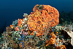Many different colourful sponges in the reef.