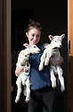 "21/04/15<br /> <br /> Melissa Ebbatson with the lambs.<br /> <br /> Two 'sheep dogs' are helping to pamper three orphaned lambs who think the dogs are their mum.<br /> <br /> The three orphaned  lambs, who wear nappies so they can have the run-of-the-house, like to snuggle up to the dogs and share their bed with them in the kitchen by the stove.<br /> <br /> Piper, an 11-year-old rhodesian ridgeback-cross and Draughtsman, an eight-year-old ex-hunting beagle, take turns looking after the week-old lambs who often try to suckle from their doting canine 'parents'.<br /> <br /> Melissa Ebbatson, 21, said: ""These three were quite poorly, so we brought them inside so we could look after them better and give them a bit more warmth. We put them in nappies so they don't make a mess in the house.  One of the dogs was having a snooze on his bed and the lambs just jumped in and joined him. And they've all become inseparable since then.<br /> <br /> ""The dogs like to clean the lambs' faces after they've had their bottles. And they enjoying romping around the place with them,"" said Melissa who helps to run Crossgates Farm, with her family near Tideswell in the Derbyshire Peak District.<br /> <br /> ""They seem to really care about them and go straight to them if they start bleating – they even come to find us if they think they're hungry.<br /> <br /> ""We change their nappies at least four-times-a-day - the baby boys even need to wear two!<br /> <br /> ""They are between seven and eight days old, and we hope to get them living back outside again when they are strong enough in another ten days or so – that's as long as the dogs let us!<br /> <br /> ""We're probably all a bit bonkers here but it all seems normal to us"", she added.<br /> <br /> All Rights Reserved: F Stop Press Ltd. +44(0)1335 418629   www.fstoppress.com."