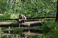 Kind keschert an einem Bach im Wald, keschern, Kescher
